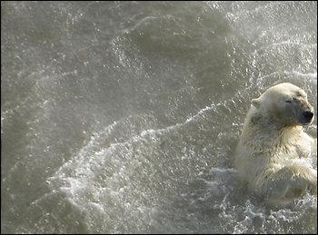 Palin Targets Polar Bears, Par Deux