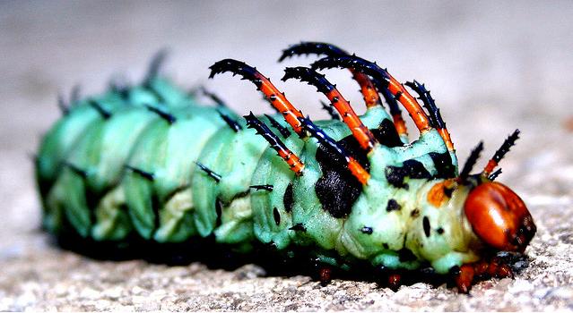 The War On Caterpillars